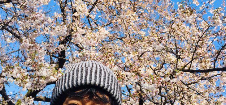 「総理に代わりて「桜を見る会」開催」